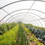 Reportaje publicitario en un invernadero de hortalizas en Salamanca